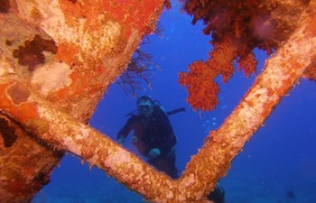 Specialty courses 4 dives program