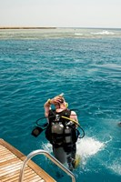 Daily Diving Trips