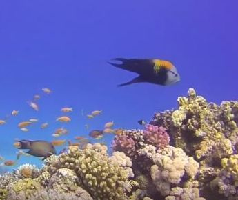 Check out Ilios Dive Club on www.taucher.net